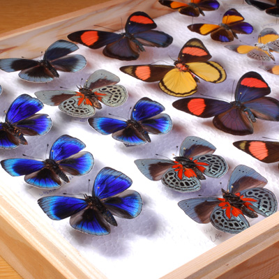 Care and Management of Natural History Collections