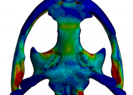Finite Element Analysis Applied to Life Sciences