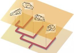 Course Studying Evolution with Geometric Morphometrics