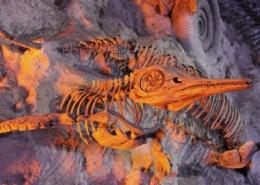 Curso Paleontologia y la sexta extincion