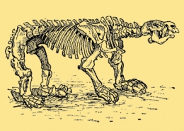 Palaeontology and the Sixth Extinction
