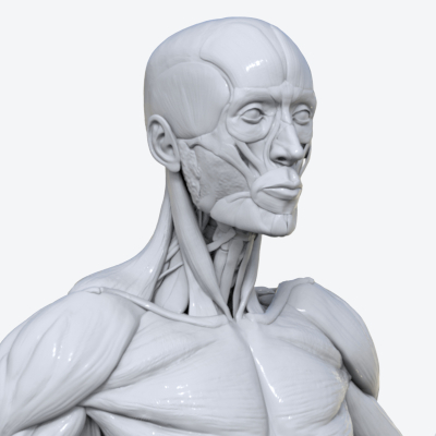 Course Introduction to Organic 3D Modelling 1