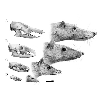 Course Naturalistic and Scientific Illustration